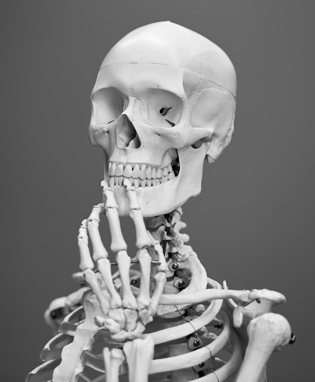 skeleton contact form page