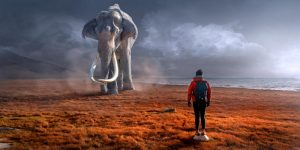 dreaming elephant with a hiker by the beach